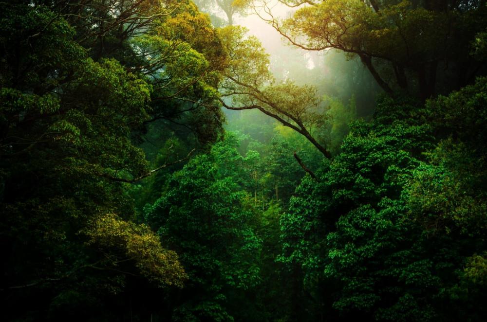 Beautiful rain forest image